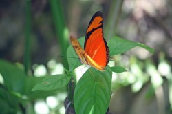 Neotropical Butterfly park1